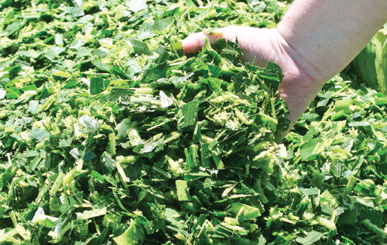 Silage Exporters
