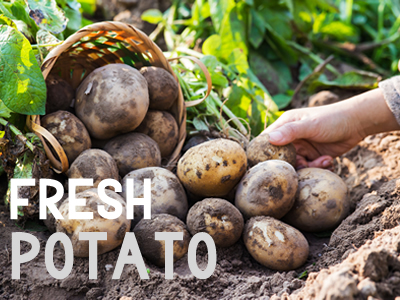 Fresh potatoe exporters