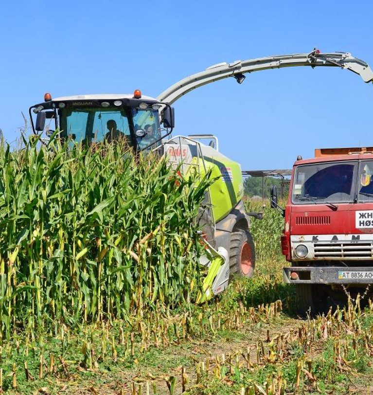 How to Trade Corn Silage?