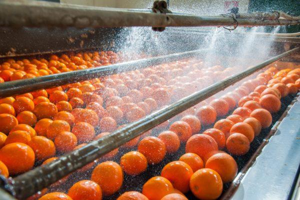 Washing of Mandarin Orange