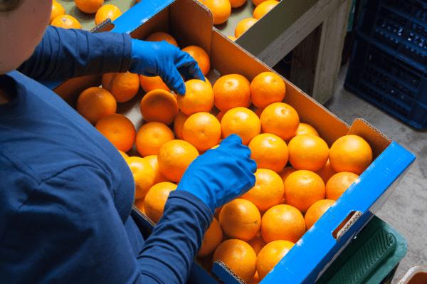 Packing of Mandarin Orange