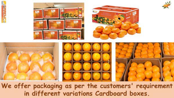 Shipment of Oranges kinnow