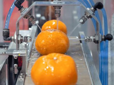 Orange exporters in Pakistan